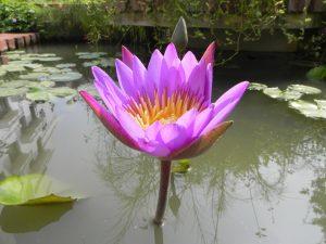 Le tappe fondamentali del Purna Yoga di Sri Aurobindo
