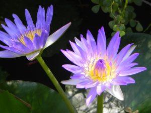 Le Tappe Fondamentali del Purna Yoga di Sri Aurobindo (seconda parte)